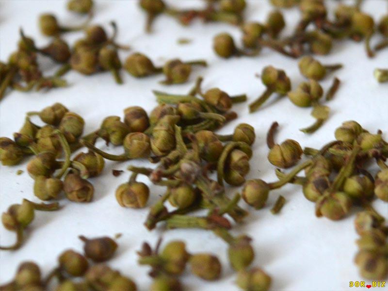 Как посадить лавровый лист из семян в домашних условиях