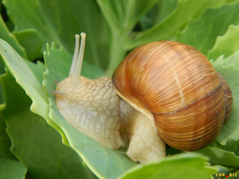 Чем кормить улиток: полезные советы и рекомендации