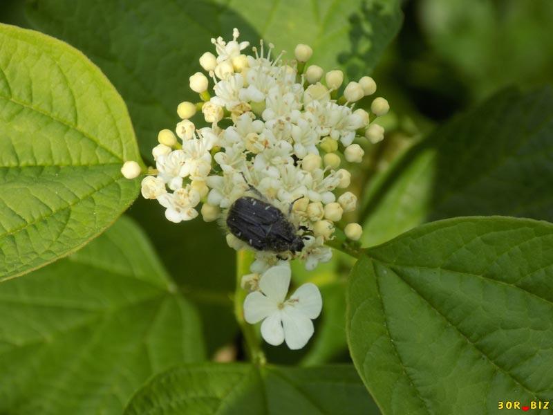 жуки красивые фото